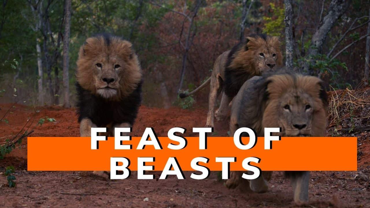 Lion Feeding Activity Victoria Falls
